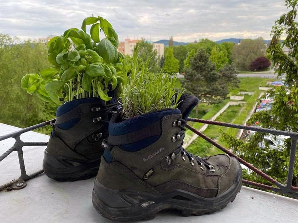 boty jako květináče