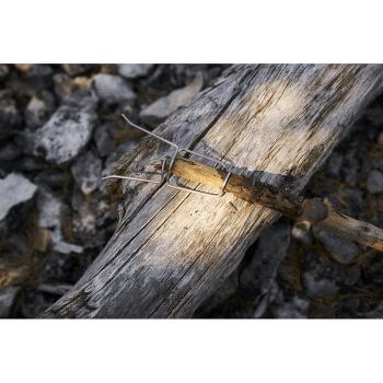Grandpa´s FireFork Bio MustyYellow/HazyBlue