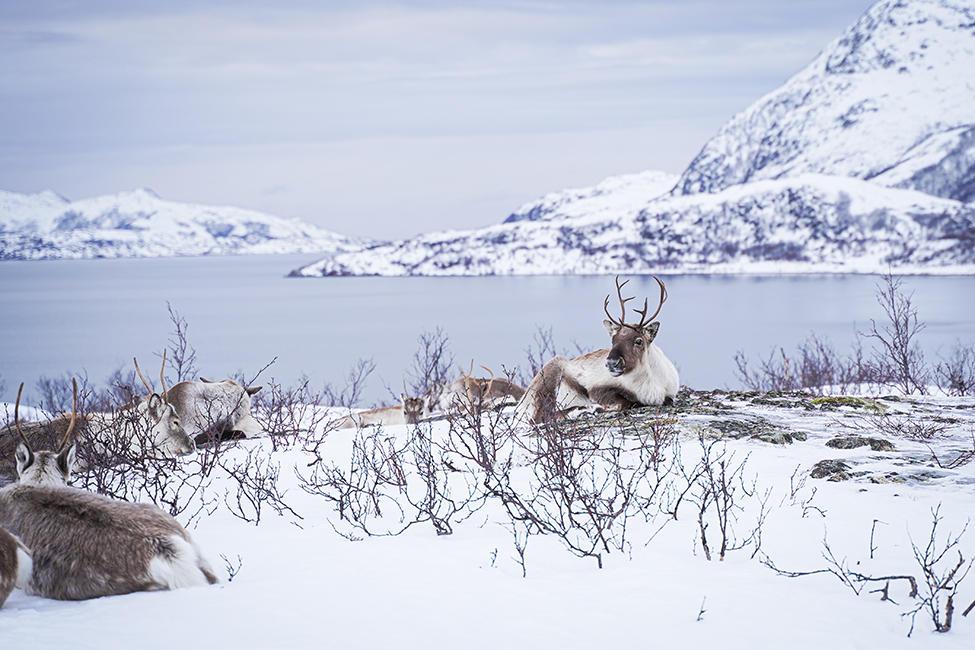 Tromso_06