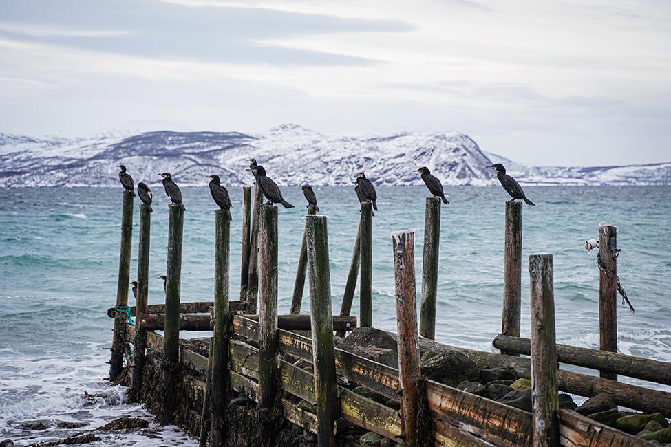Tromso_04