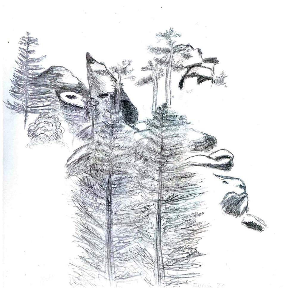Obrazek8